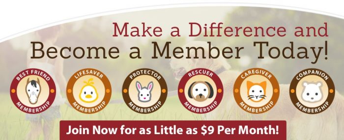Volunteer With Animals Animal Charity Appealing for Members