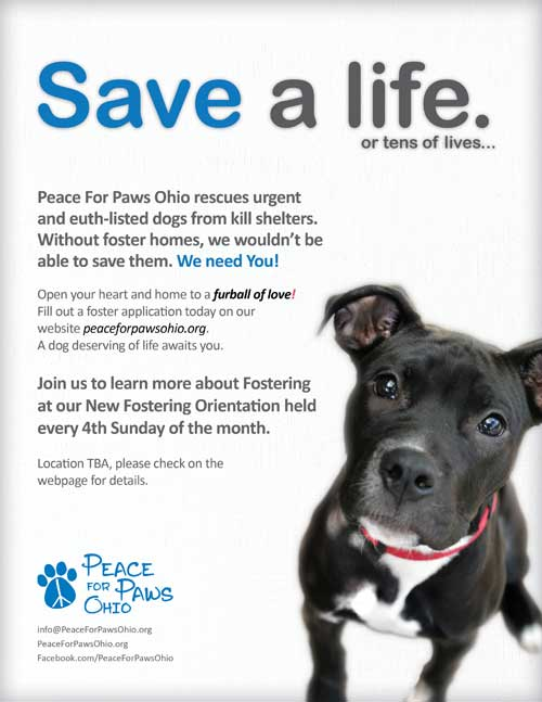 Fostering Animals Saves Lives