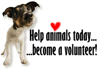 Volunteer With Animals Help Animals Today