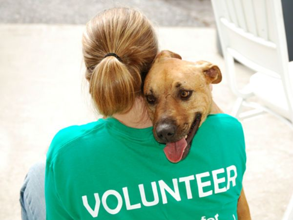 Animal Volunteer in Action