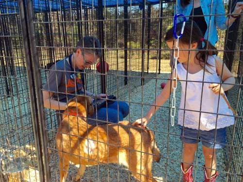 Volunteer With Animals People Meeting Rescue Shelter Dog