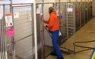 Volunteer With Animals Rescue Shelter Being Cleaned