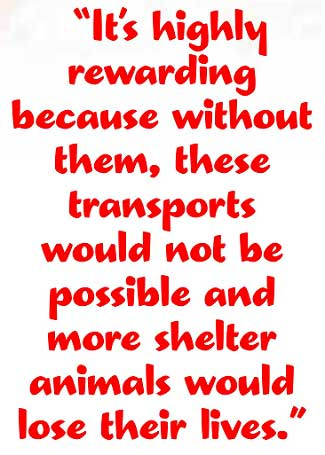 Volunteer With Animals Transport Coordinator Quote