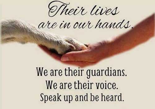 Animal Rights Activism Everyone Can Do Be Advocates For Animals