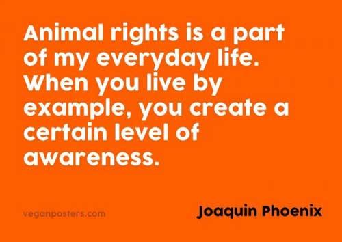 Living A Vegan Lifestyle Raises Awareness