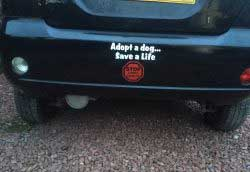 Animal Rights Activism Everyone Can Do Put Animal Rights Messages On Your Car Example 2