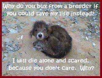 List Of Animal Rescue Shelters I Will Die Alone And Scared