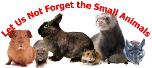Let Us Not Forget The Small Animals