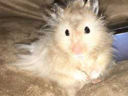 List Of Animal Rescue Shelters Tiny Paws Big Spirit Animal Rescue Hamster