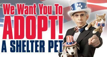 We Want You To Adopt A Shelter Pet