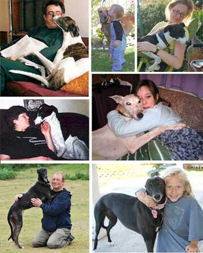 Greyhounds Make Wonderful Gentle Pets