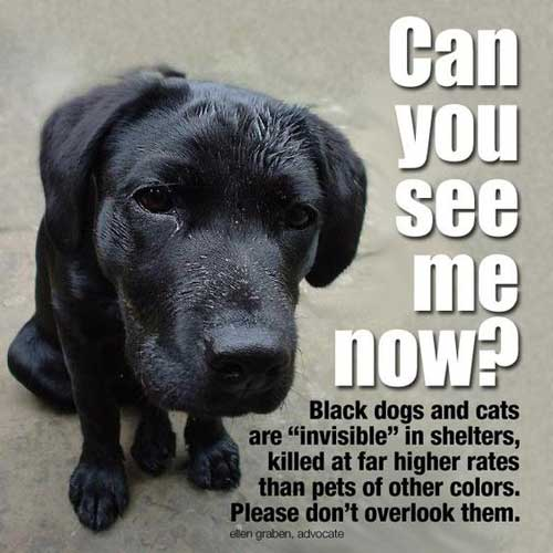 Why To Adopt A Rescue Pet Can You See Me Now