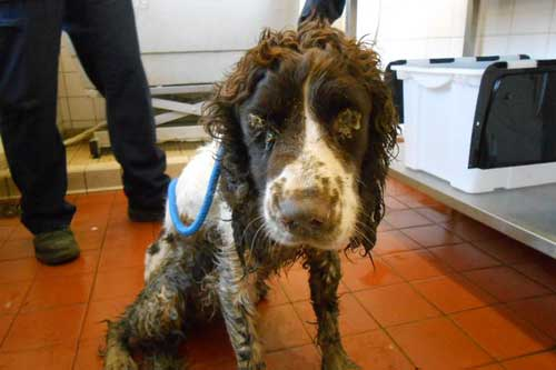 Why To Adopt A Rescue Pet Dog Abandoned In Newport Wales