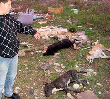 Mass Poisoning Of Dogs In Bulgaria