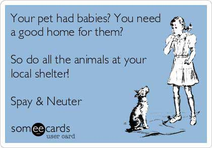 Why To Adopt A Rescue Pet Spay And Neuter