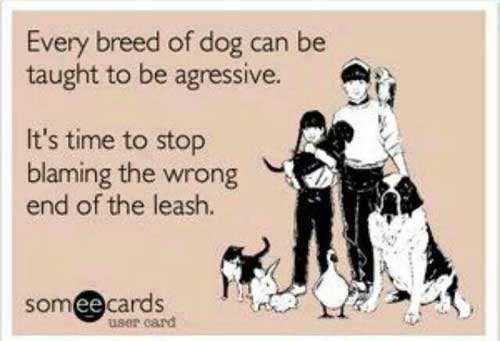Stop Blaming Breeds For Their Behaviour