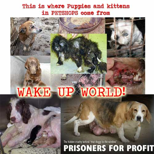 Why To Adopt A Rescue Pet  Wake Up World